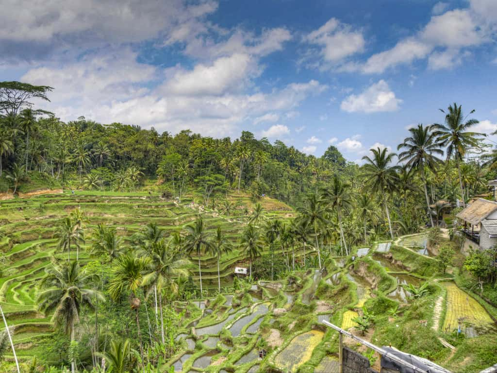Beginner's Guide to Bali - Island of the Gods