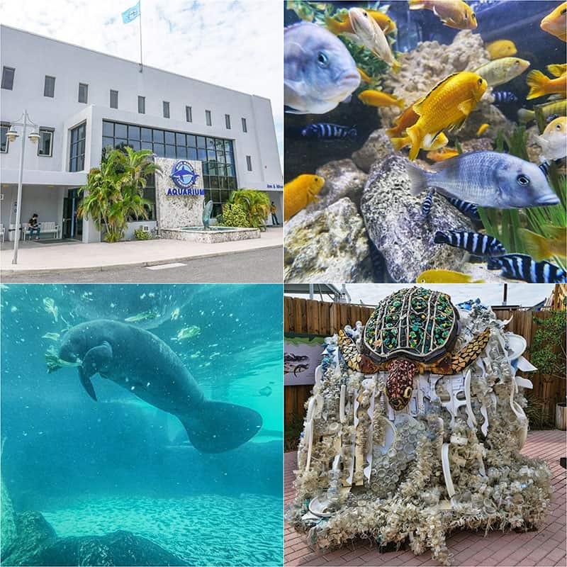 Mote Marine Laboratory, Sarasota, Florida