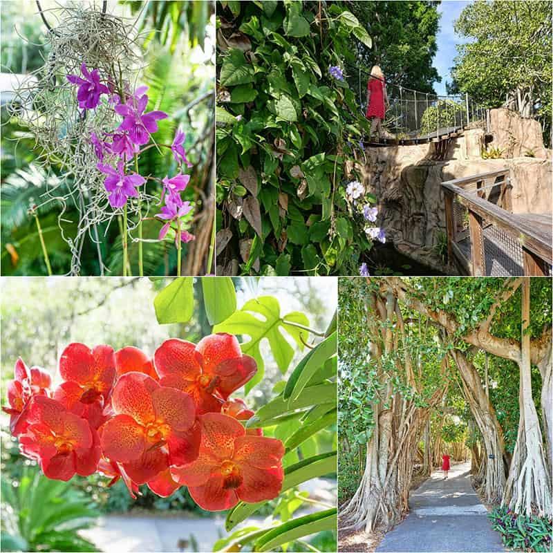 Marie Selby Botanical Gardens, Sarasota, Florida