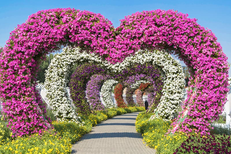 Dubai Miracle Garden heart arches - this is considered to be the world's largest flower garden