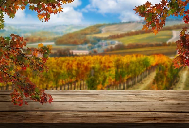 A Napa Valley vineyard in fall